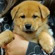 MIX子犬の男の子女…