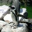 Penguin 20…