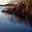 冬の多摩湖と野鳥