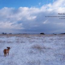 雪景色をとことん楽し…