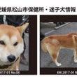 松山市保健所・迷子犬…