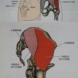 股関節の内旋と外旋、…