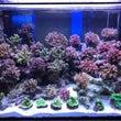 サンゴ爆入荷