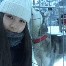 フィンランドで犬ぞり…
