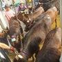 牛の勉強会