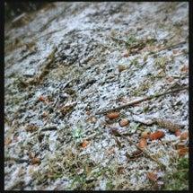 ドングリと雪のコラボ…