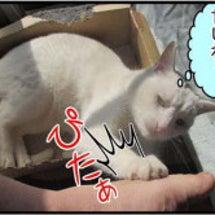 【猫日記】白にゃ、足…
