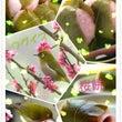 ピンクと黄緑(^o^…