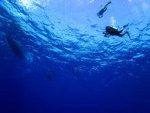 サイパン体験ダイビング