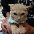 第2回川崎地域猫セミ…