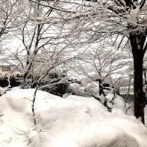 朝は雪国、午後は…