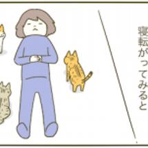 子猫と遊ぶ