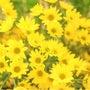 春の花達で銀座でフラ…
