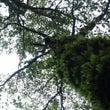 冬の蘚苔林でコケめぐ…