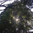 ○森林セラピーが、こ…