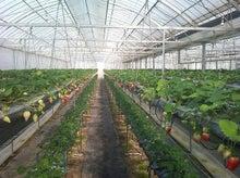 農マル園芸吉備路農園 栽培ハウス