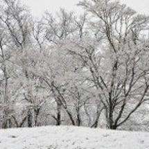 またまた強い冬型