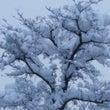 14年前の雪が降りし…