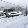 大雪です!!!