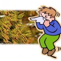 静岡の花粉シーズンは…