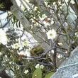 梅の花・・・