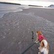 砂浜を散歩(疾走!?…