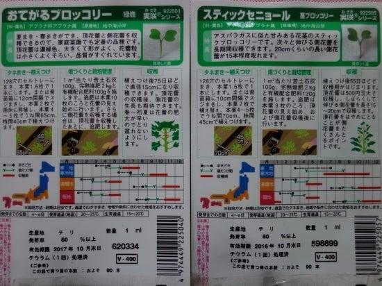 ブロッコリー種まき-1-1