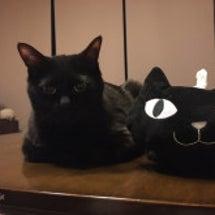 他猫のそら似 par…