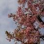 春は一歩一歩近づいて…