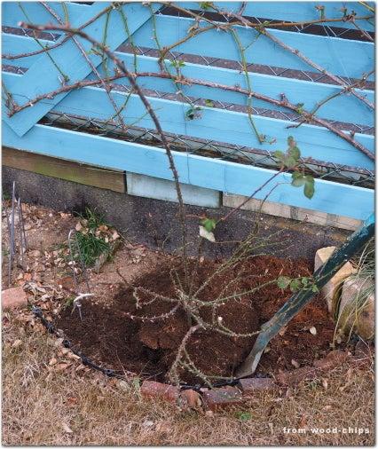 バラの植え込み 作業 管理