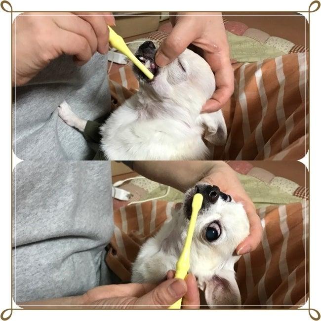 プリン歯磨き
