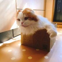 ロハコの箱にもりもり…