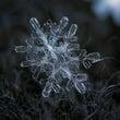 雪の結晶って美しいね…