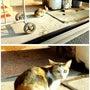 Cute Cat (…