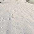 雪上ワンプロ