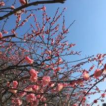 春が来てる❤️