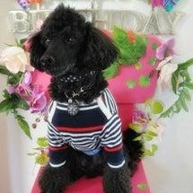 バルちゃん。お誕生日…