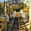 吾妻山公園の菜の花♪