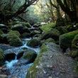 緑の森が戻ってきてい…