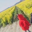 *菜の花畑*
