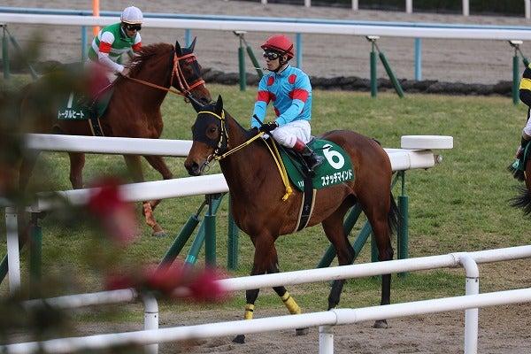 170218 京都牝馬S スナッチマインド7