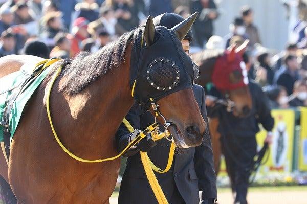 170218 京都牝馬S スナッチマインド3