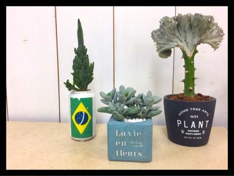盆栽の通販|所沢園芸の盆栽販売ショップ