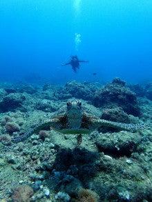 マニャガハ島体験ダイビング