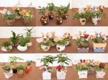 母の日用ミニ観葉植物仕様
