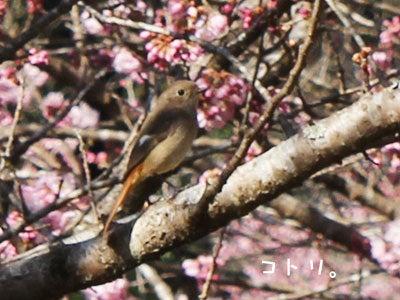 20170316小鳥