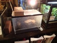 イシガメのガッツ02