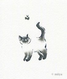 miiya春猫