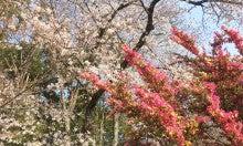 桜ミックス