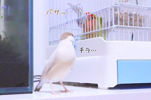 ちゅんこ日和